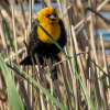 Thumbnail image for Birding with a Point & Shoot Camera.