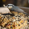 Thumbnail image for THE BEST SUET IN THE KNOWN UNIVERSE