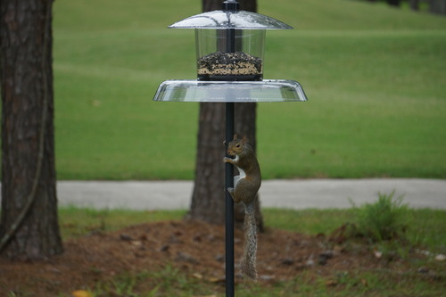 feeder squirrel best keep more min out how feeders caged wild to bird baffles shutterstock proof of squirrels